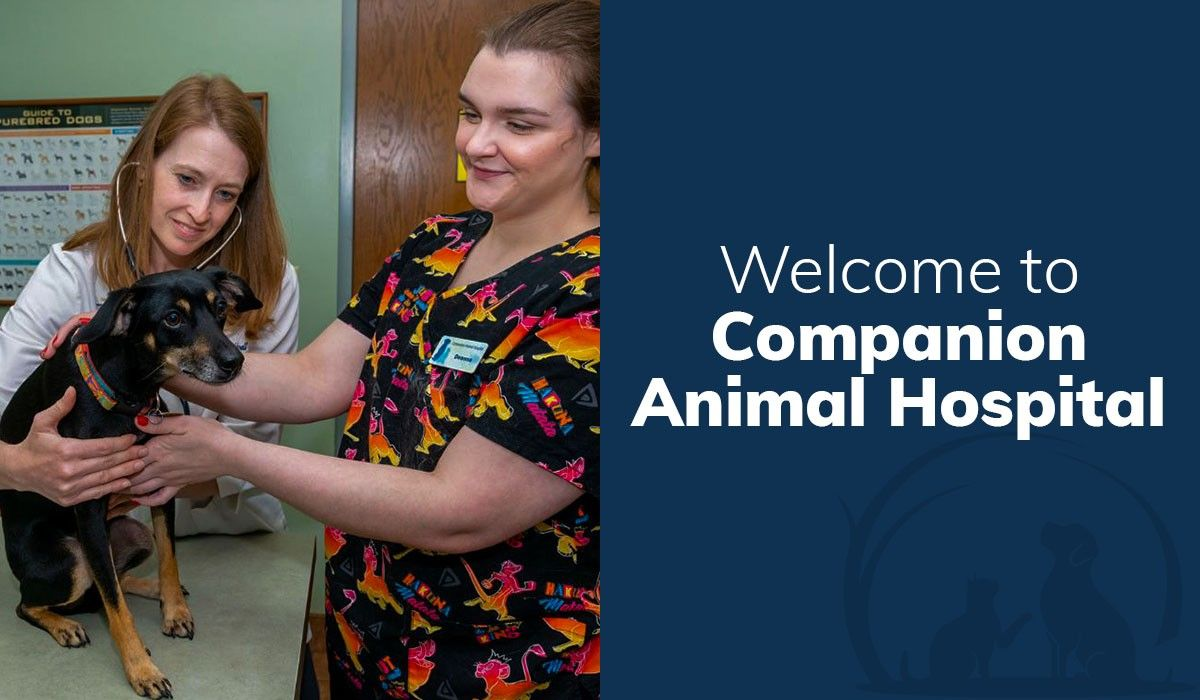 Welcome to Companion Animal Hospital